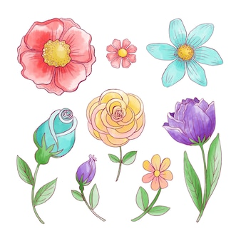 Assortment of spring flower collection