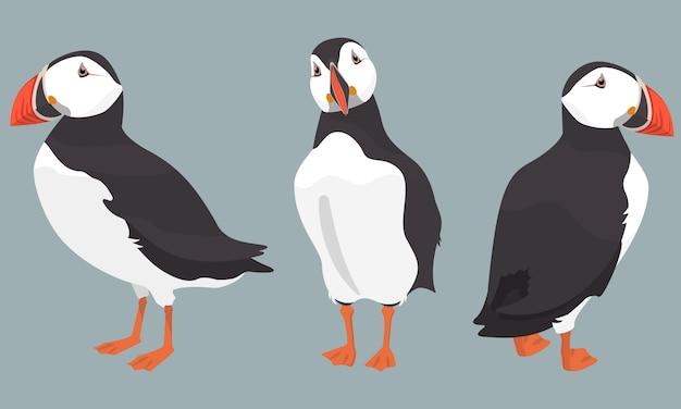 Атлантический тупик в разных позах. северная птица в мультяшном стиле.