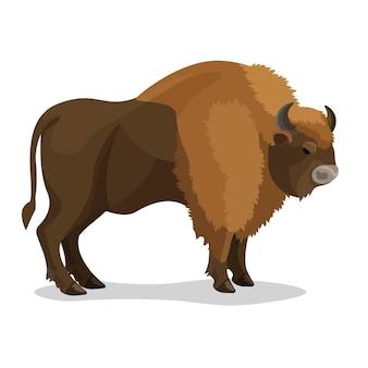 Зубр животное коричневого цвета с двумя рогами, маленьким хвостом, изолированным на белом. иллюстрация вымершего типа крупного дикого скота, населявшего европу, азию и северную африку, в плоском стиле