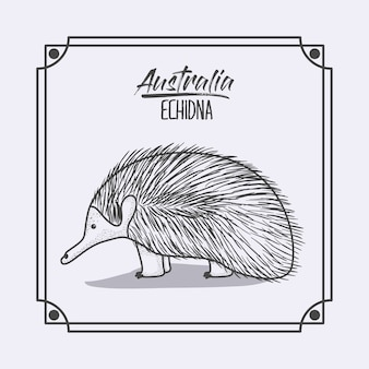 Австралия echidna в рамке и монохромный силуэт