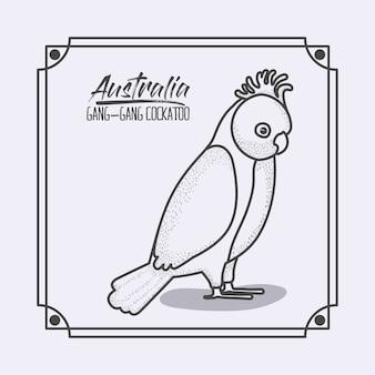 Australia gang-gang cockatoo frame in monochrome silhouette