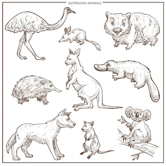 Australian animals and birds vector sketch