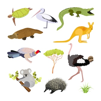 Australian animals. illustration in flat style.the main symbols of the country.