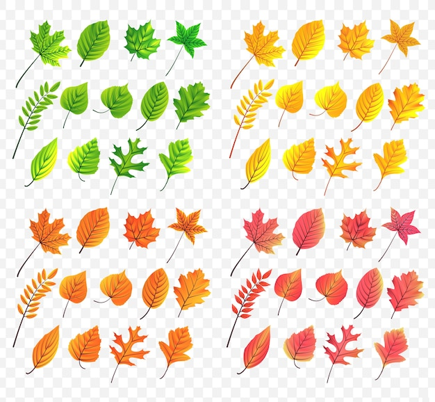 Autum leaves collection