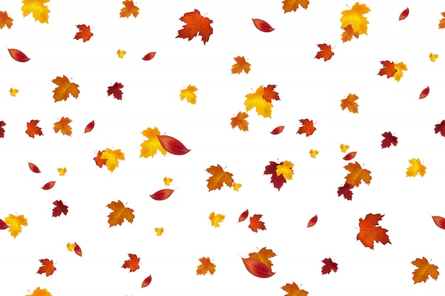 Autumn background design. seamless pattern. autumn falling red, yellow, orange and brown leaves isolated on white background.  autumnal foliage fall of maple leaves