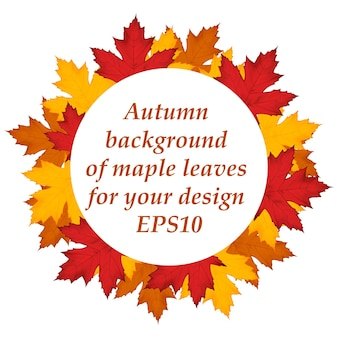Autumn background of maple leaves around. vector