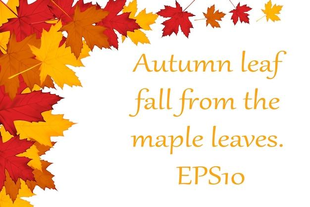 Autumn background of maple leaves. vector eps10 illustration