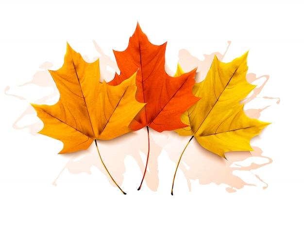 Осенний фон с тремя красочными листьями.