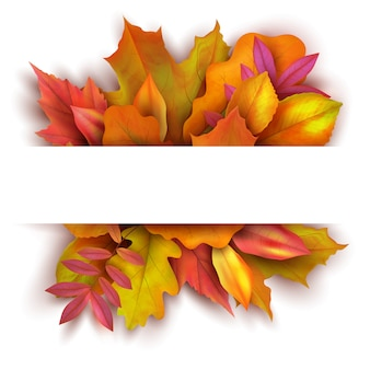 Autumn background with forest fall leaves. october holiday nature vector banner design