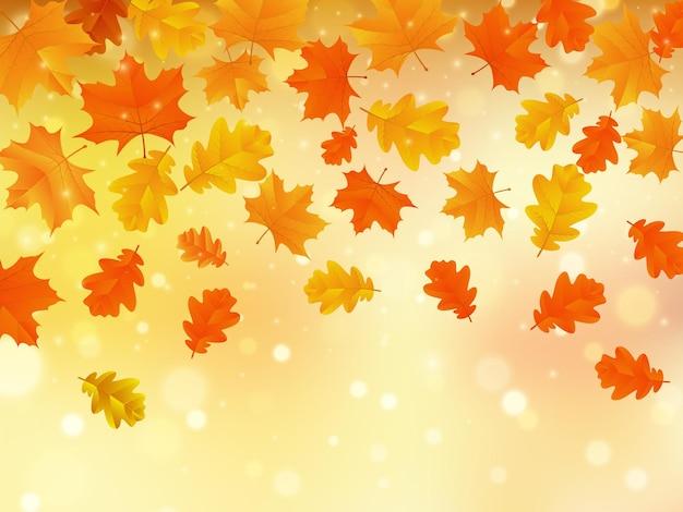 カエデとオークの葉と秋の背景。ベクトルイラスト