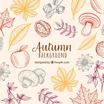 Autumn background with nature