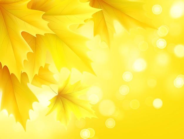 黄色の秋のカエデの葉と秋の背景。