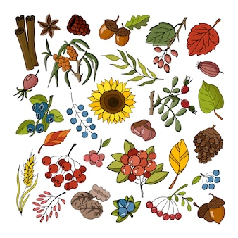 Autumn collection of plants and flowers