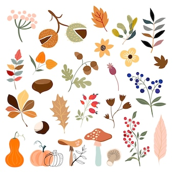 Autumn  collection with botanicals differents plants and leaves mushroom pumpkins berries