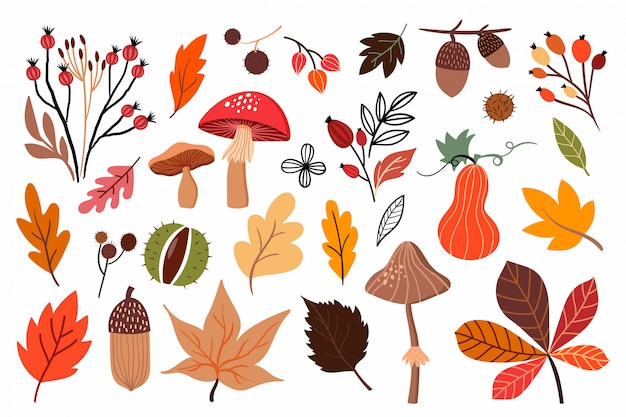Autumn collection with different mushrooms and seasonal plants