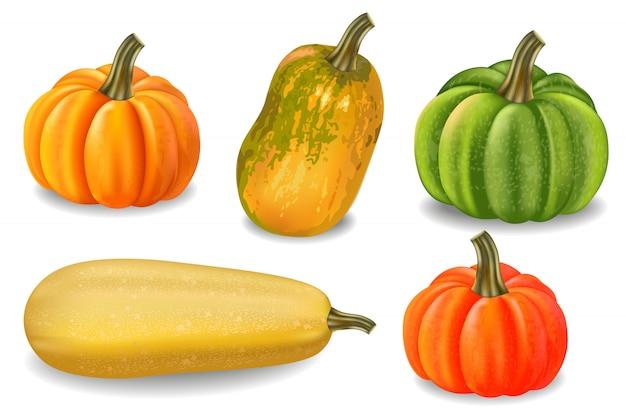 Autumn colorful pumpkins collection