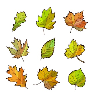 Autumn or fall leaves set, isolated on white. cartoon flat style.