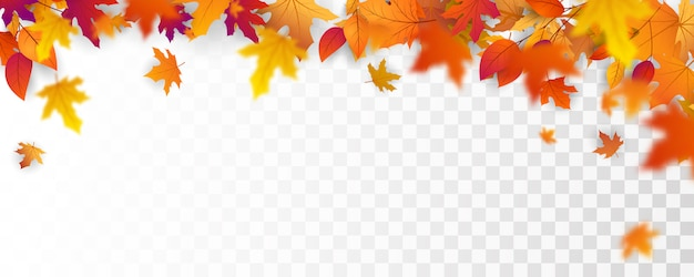 Autumn falling leaves background  vector template.