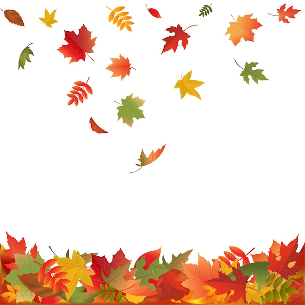 秋の落ち葉、白い背景のイラスト