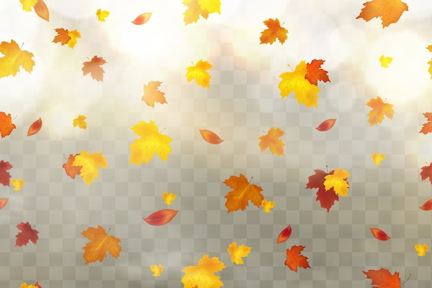 Autumn falling red, yellow, orange, brown leaves on transparent background.