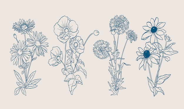 Осенние цветы нарисованы контурами