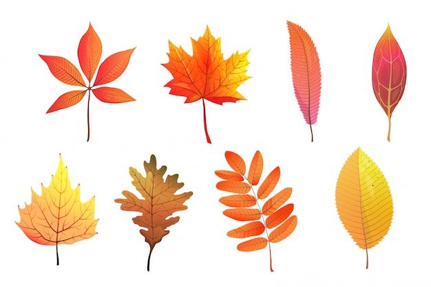 Набор плоских иллюстраций осенней листвы