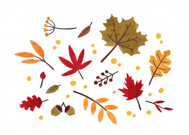 Autumn foliage hand drawn illustrations set. different trees dried leafage and berries isolated on white background. fall season forest flora. maple, oak, rowan and chestnut leaves composition.