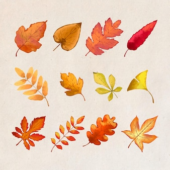 Autumn forest leaves design