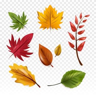 秋の森の葉
