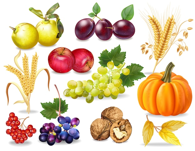Autumn fruits and vegetables collection