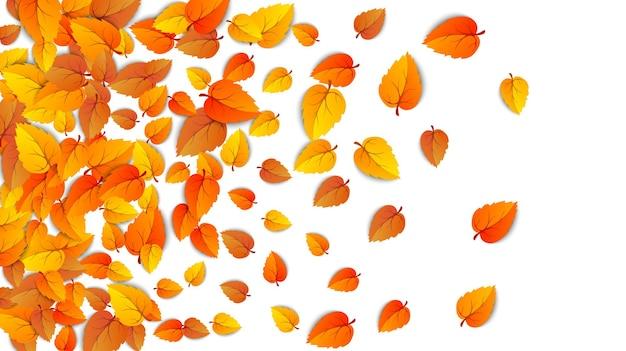 Autumn golden leaf frame template tree fallen autumn leaves isolated on white backgroun