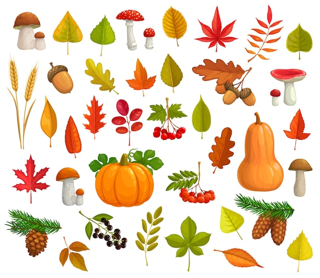 Autumn  icons cartoon falling leaves, pumpkin, mushrooms, pine cones. maple, oak or poplar and birch tree with chestnut leaf and rowan. fall seasonal ripe berries, wheat ears and fall foliage.