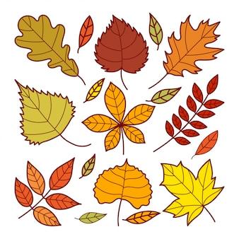 秋の葉の落書き