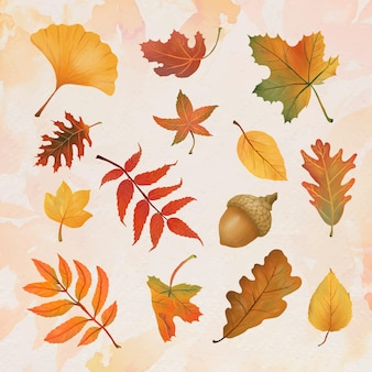 Autumn leaf element vector set in hand drawn style