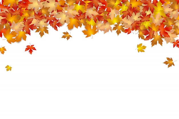 白い背景の上に落ちる秋の葉