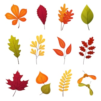 Autumn leaf set including oak, maple, birch, rowan and other leaves. vector cartoon elements isolated