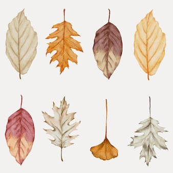 Autumn leaf watercolor collection