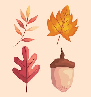 Autumn leafs and branch with nut icons  illustration