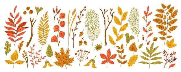 Осенние листья и ветки с ягодами шишки желудей