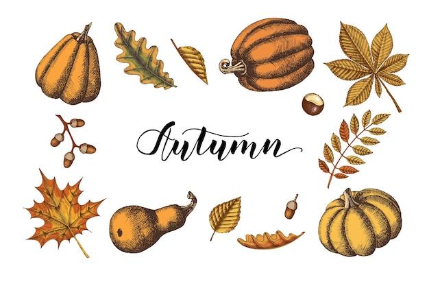 Осенние листья и набор тыкв. рисованной цветной клен, береза, каштан, желудь, ясень, дуб. эскиз. винтаж. гравировка иллюстрации.