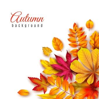 秋の葉の背景。黄色のカエデ、オーク、ナナカマドの葉と紅葉の境界線。秋のテーマバナー季節クリエイティブアブストラクトペイントアートテンプレート