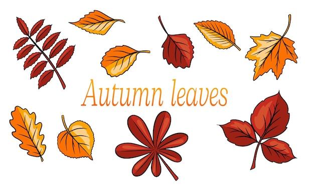 Осенние листья большой набор. абстрактные резные листья. мультяшный стиль. векторная иллюстрация для дизайна и декора.