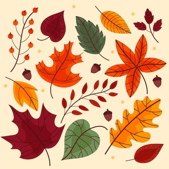 Autumn leaves collection design