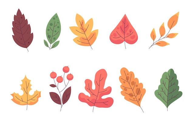 Autumn leaves collection