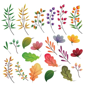 Autumn leaves colored element collection set illustration