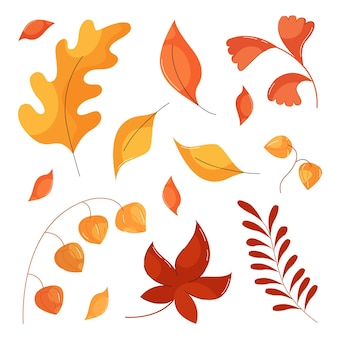 Autumn leaves in flat style, physalis branch, oak and maple leaves isolated on white background