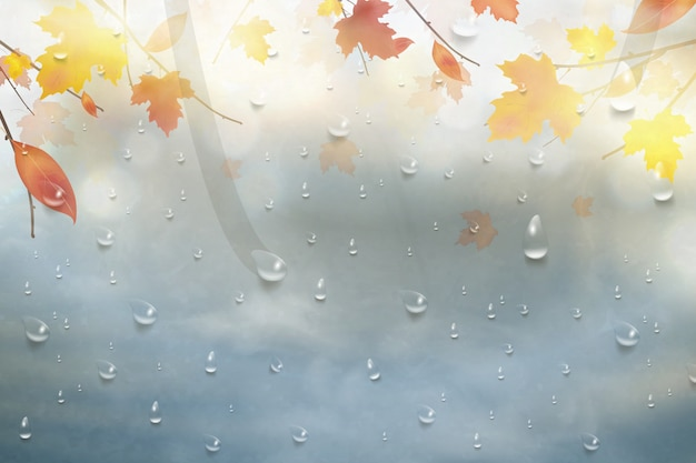 Осенние листья для дождливого стекла. природа осень фон с каплями реалистика на окне, ветвь кленовых листьев. осенний сезон дождливая погода дизайн.
