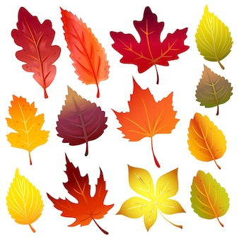 Autumn leaves forest element icon set