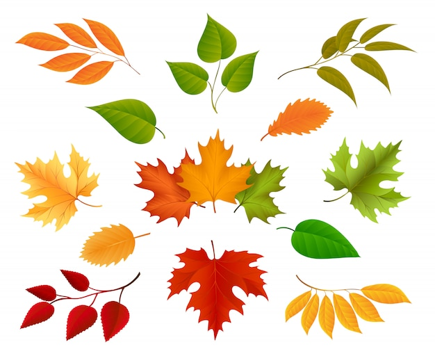 Autumn leaves icons