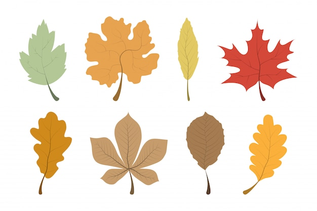 Autumn leaves. leaves collection. template autumn leaves in a row.
